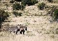 Mountain zebra NP.jpg