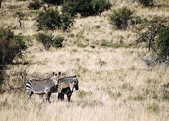 Mountain Zebra Nationalpark