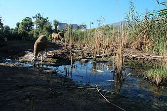 Water supply and sanitation in Algeria - Water pollution is a serious issue in Algeria, as shown here in the Oued Soummam.