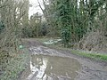 Muddy Puddle - geograph.org.uk - 330363.jpg