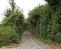 Mumfords Lane - geograph.org.uk - 910064.jpg