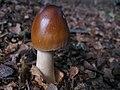 Mushroom-IMG 3967.JPG