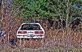 Mustang in Weeds (5438420365).jpg