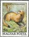 Mustela eversmanni stamp.png
