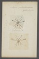 Mymar - Print - Iconographia Zoologica - Special Collections University of Amsterdam - UBAINV0274 047 02 0016.tif