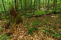 Národná prírodná rezervácia Stužica, Národný park Poloniny (15).jpg