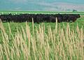 NRCSOR00072 - Oregon (5833)(NRCS Photo Gallery).jpg