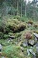 NSG Rannatal Vermoorte Blockhalde 20091003.jpg
