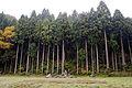 Nanyoji-ato Garden of Ichijodani Asakura Family Historic Ruins05n4592.jpg