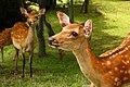 Nara (3810596361).jpg