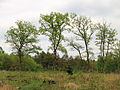 Nationaal Park Drents-Friese Wold 010.JPG