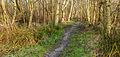 Nationaal Park Weerribben-Wieden Pad tussen berken en moeras 02.jpg