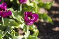 National Botanic Gardens, Dublin (6872702048).jpg