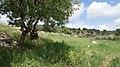 Nature - panoramio (48).jpg