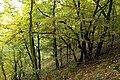 Nature reserve Zvolská homole in autumn 2014 (1).JPG