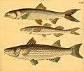 Naturgeschichte in Bildern mit erläuterndem Text (Taf. CXIV) (6058678399).jpg