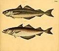 Naturgeschichte in Bildern mit erläuterndem Text (Taf. XXIX) (6059208240).jpg