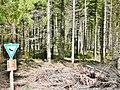Naturschutzgebiet Hesel-, Brand- und Kohlmisse - panoramio (6).jpg