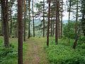 Naujosios Rėvos piliakalnis, Vilniaus rajonas 1.JPG