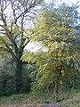 Near Oakenhill Lodge, May 2012 - panoramio.jpg