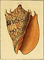Neues systematisches Conchylien-Cabinet (1829) (14784047062).jpg
