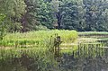 Niederlausitz 08-13 img19 Naturpark Schlaubetal.jpg