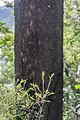 Nothofagus solandri in Cullen Point SR 02.jpg