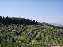 Oliveti (calenzano).JPG