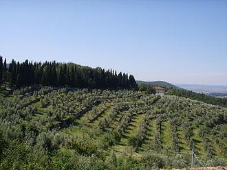 Calenzano - Hills in the territory of Calenzano