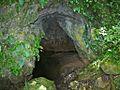 One Leaf Plants (Monophyllaea glauca) bordering a cave entrance (8416537686).jpg