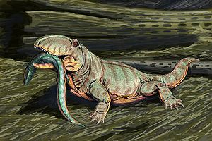 Ophiacodon - O. mirus restored with a terrestrial lifestyle.