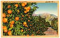 Oranges and Snow in Southern California (63809).jpg