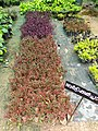 Ornamental plants 01.jpg