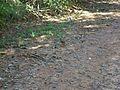 Pássaro no chão 3.jpg