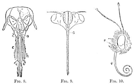 PSM V39 D241 Insect body parts.jpg