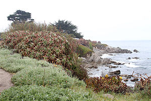 Pacific Grove, California - The rugged coastline off Ocean View Boulevard in Pacific Grove
