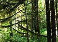 Pacific Rim National Park - Rainforest Trail (3670678277).jpg