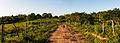 Panoramica de Finca en Chaguaramal, Estado Miranda.jpg
