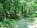 Parc-nature du Bois-de-l-ile-Bizard 20.jpg