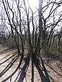 Parcours d'Orientation Patrimoine du Hameau de Ternier @ Saint-Julien-en-Genevois (51069868108).jpg