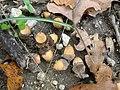 Park Kenana - acorns.jpg