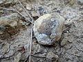Park prirode Dobrun - Rzav 06.JPG