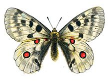 Sorry, that butterfly illustration public domain very good
