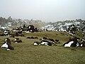 Parque nacional del Teide edit.jpg