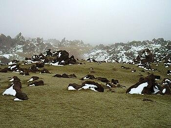 Parque nacional del Teide edit