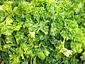 Parsley leaves.jpg