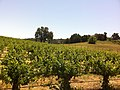 Paso Robles AVA vineyards at Justin.jpg