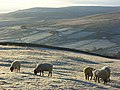 Pastures, Alston - geograph.org.uk - 1074535.jpg