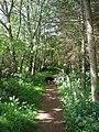 Path Through The Gallows Brae Woods - geograph.org.uk - 837480.jpg