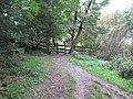 Path around Loe Pool - geograph.org.uk - 966538.jpg